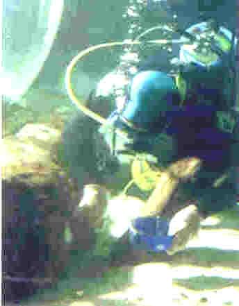 Emergency Boat Repair Epoxy Resin - Underwater Hull Rescue